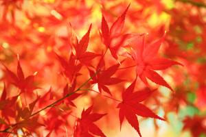 free-photo-autumn-leaves-01