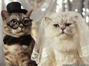 funny cats wallpapers 1