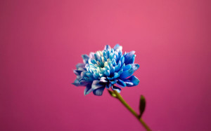 wallpape-flower-10