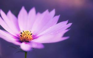 wallpape-flower-15
