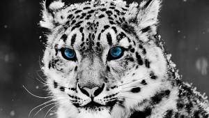 wallpaper-cool-animal-05