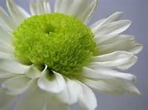 white green2