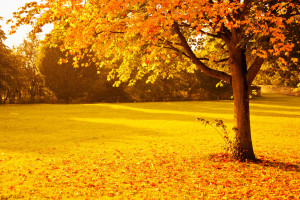 yellow-autumn