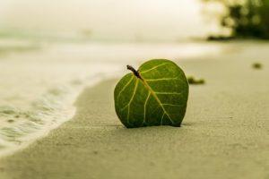 beach-394503__340