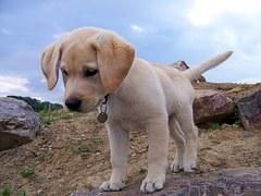 dog-954520__180