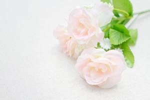 free-photo-rose-02