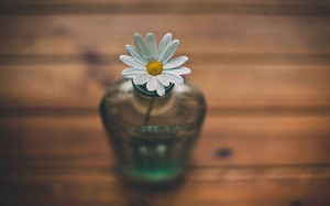 wallpape-flower-04