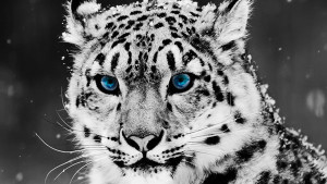 wallpaper-cool-animal-05