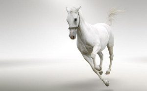 wallpaper-horses-photo-08